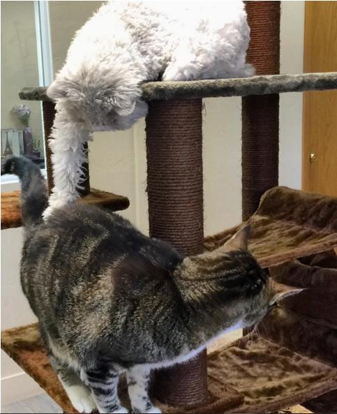 gato que nacio para juzgarte jugando