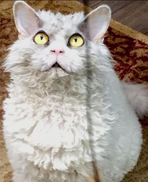 gato que nacio para juzgarte luz celestial