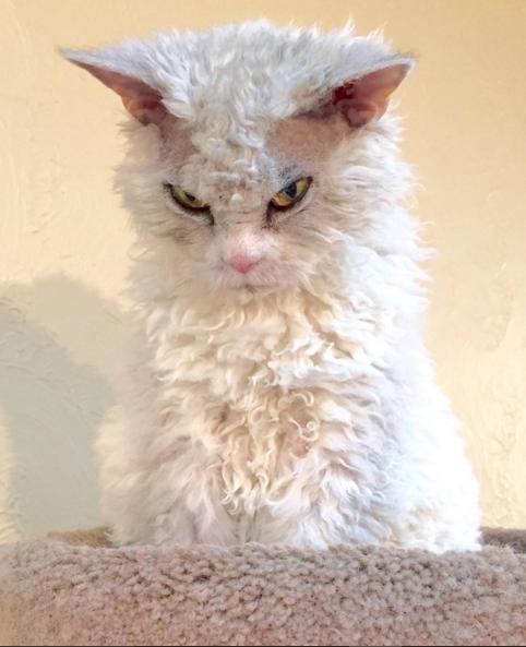 gato que nacio para juzgarte