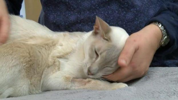 gato-rescatado7