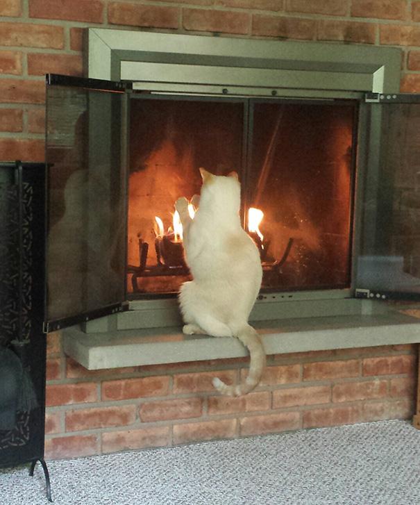 gatos-disfrutan-calor-1