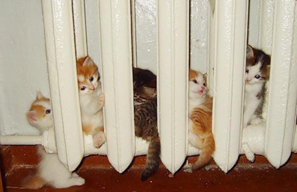 gatos-disfrutan-calor-11