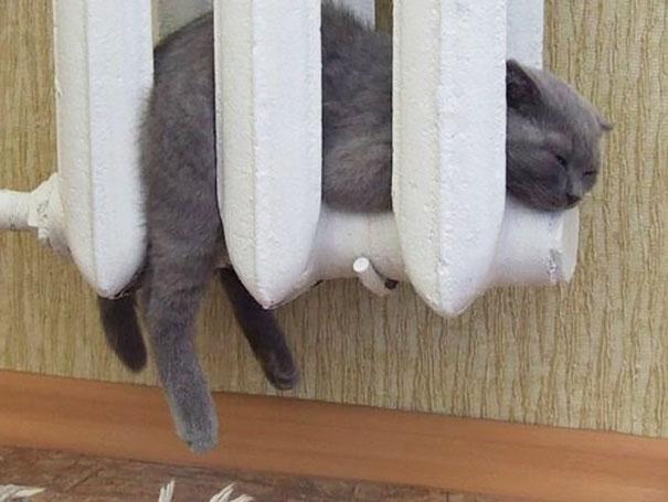 gatos-disfrutan-calor-12
