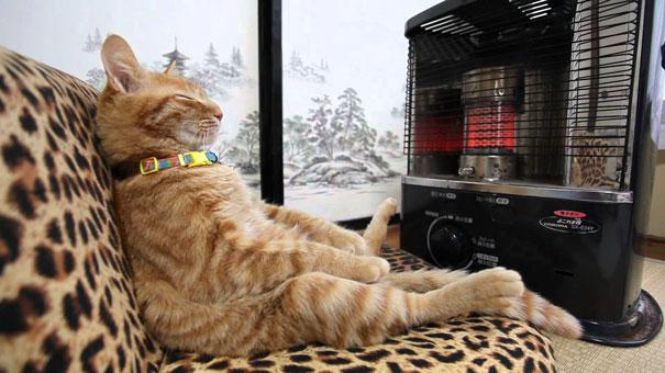 gatos-disfrutan-calor-13