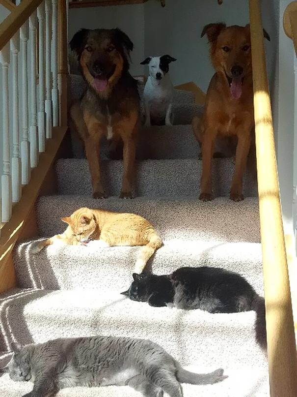 gatos-disfrutan-calor-14