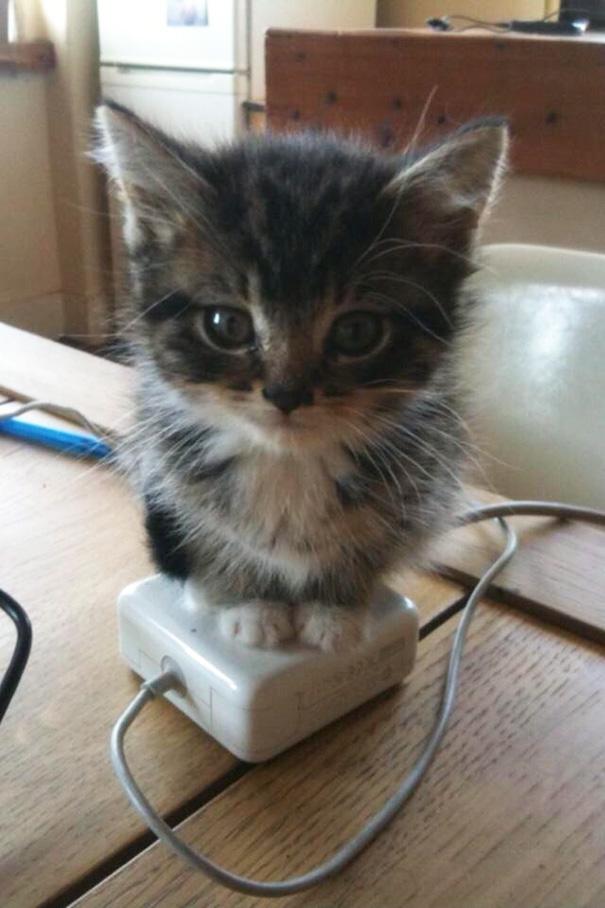 gatos-disfrutan-calor-15