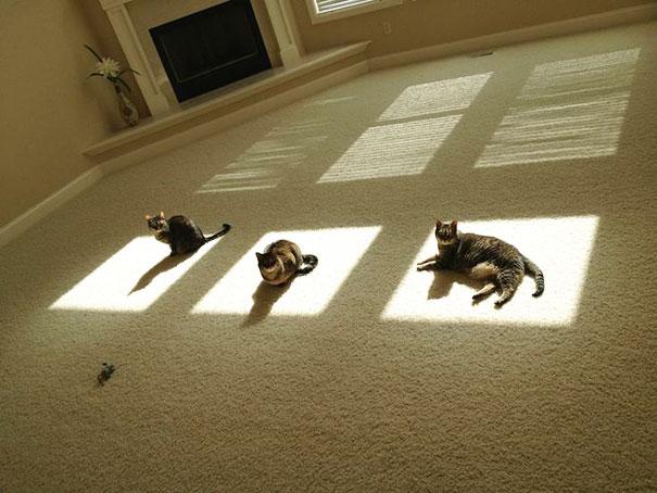 gatos-disfrutan-calor-16