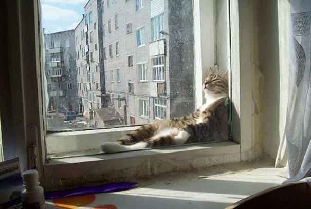gatos-disfrutan-calor-17