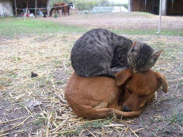 gatos-disfrutan-calor-18