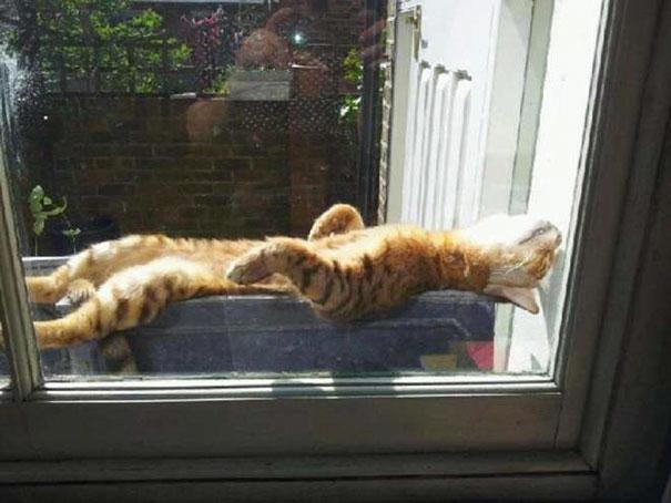 gatos-disfrutan-calor-19