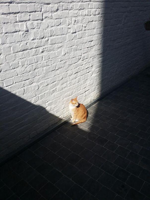 gatos-disfrutan-calor-2