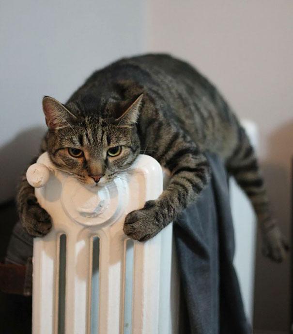 gatos-disfrutan-calor-22