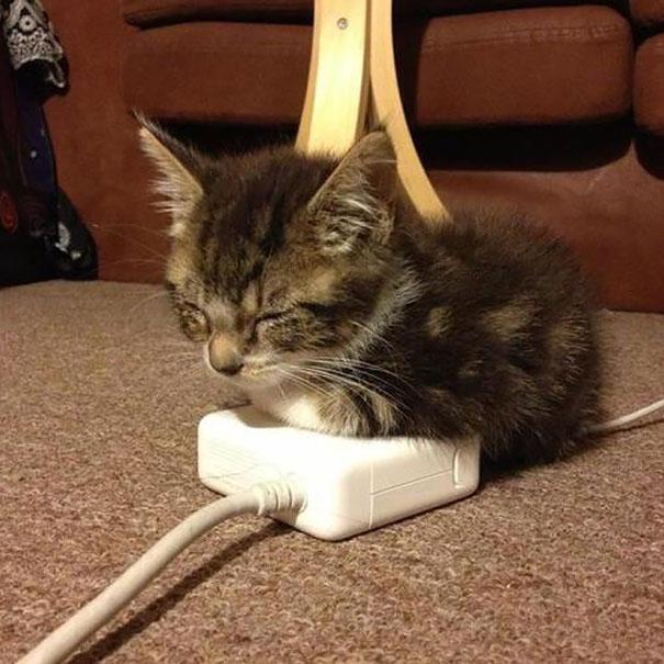 gatos-disfrutan-calor-23
