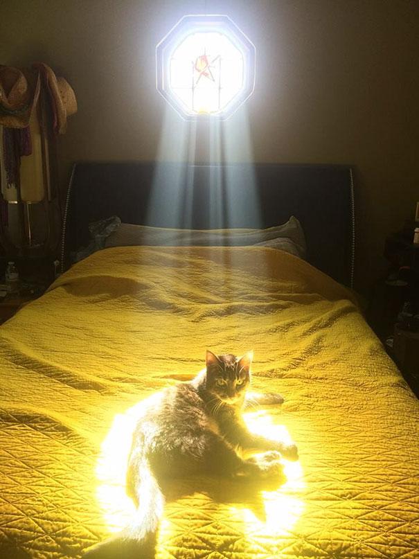 gatos-disfrutan-calor-25
