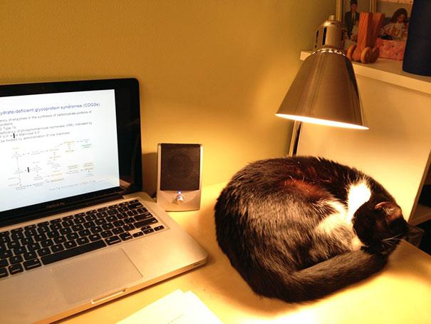 gatos-disfrutan-calor-3