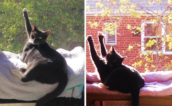gatos-disfrutan-calor-5