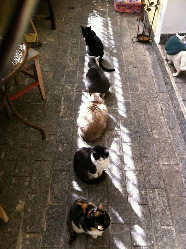 gatos-disfrutan-calor-6