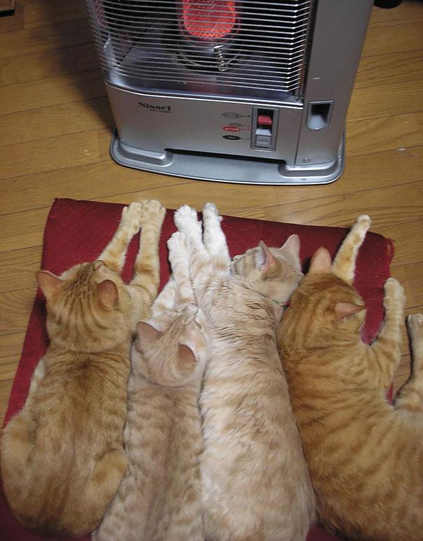 gatos-disfrutan-calor-9