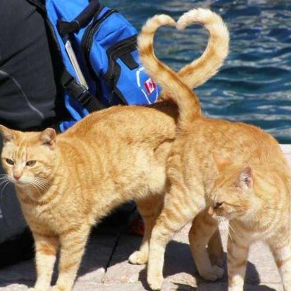 gestos-gatos7