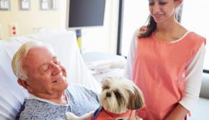 hospital-permite-mascotas