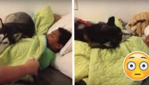 husky-no-se-quiere-despertar-1