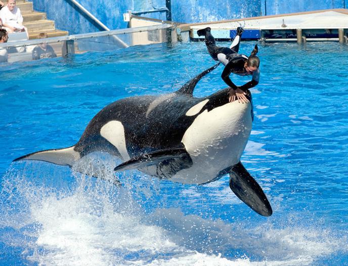 kayla seaworld orca