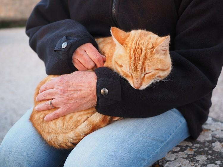 mascotas mejoran vida 5
