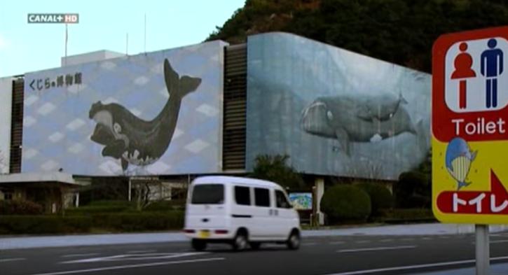 matanza-delfines-taiji4