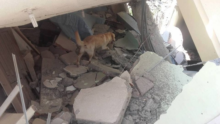 muere-dayko-perro-ecuador1