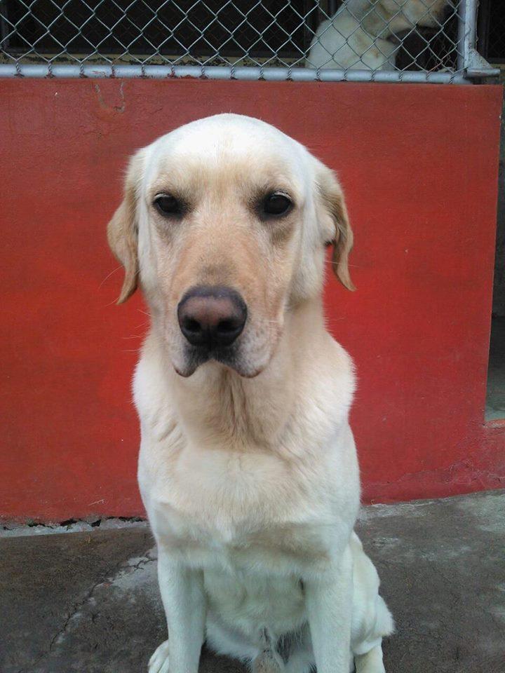 muere-dayko-perro-ecuador10