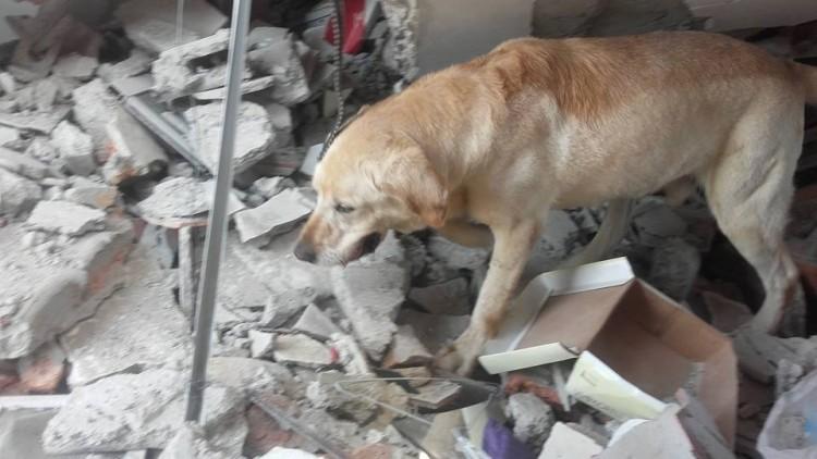 muere-dayko-perro-ecuador2
