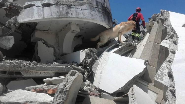 muere-dayko-perro-ecuador3