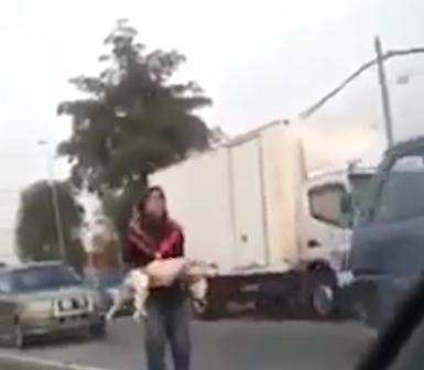 mujer-musulmana-salva-a-un-perro5