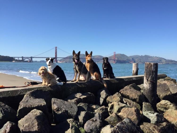 Este paseador de perros es extraordinario y sus caminatas for Animales fuera de serie