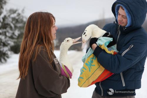 patos-rescatados15