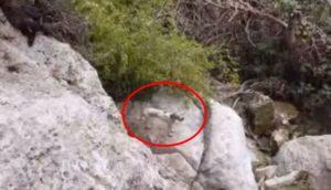perra en crater 10