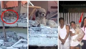 perro-adoptado-despues-de-terremoto-ecuador1 - copia - copia