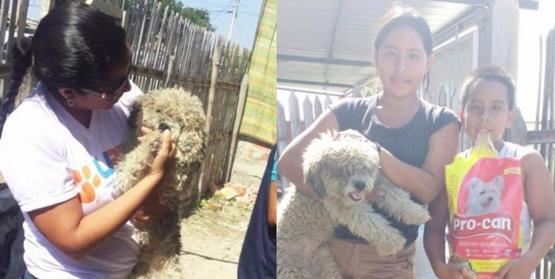 perro-adoptado-despues-de-terremoto-ecuador3
