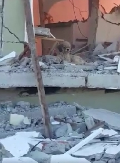 perro-adoptado-despues-de-terremoto-ecuador4