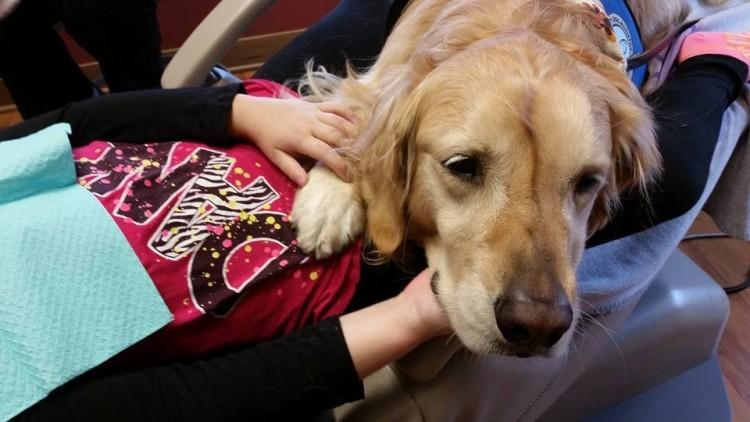 perro-calma-a-pacientes-dentista7