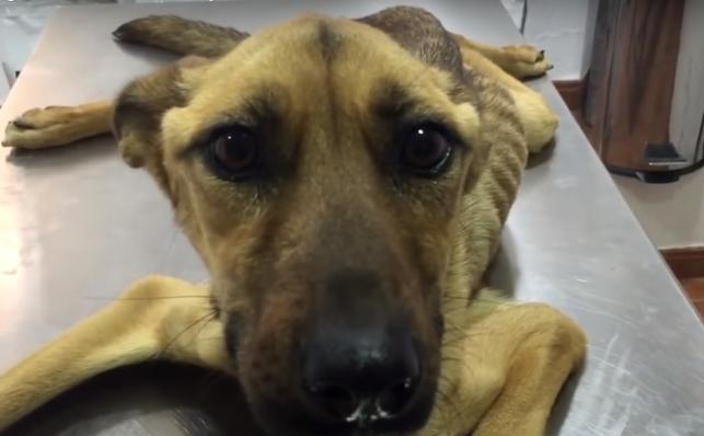 perro-desnutrido-rescatado1