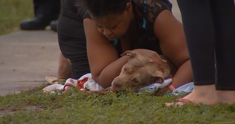 perro muere por al defender mujer 1