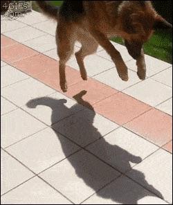perros-como-bebes-10