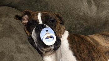 perros-como-bebes-11