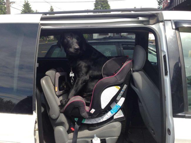 perros-como-bebes-12