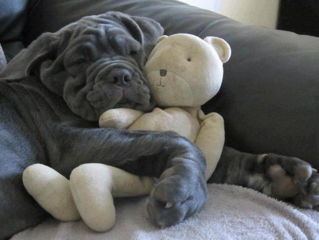 perros-como-bebes-4