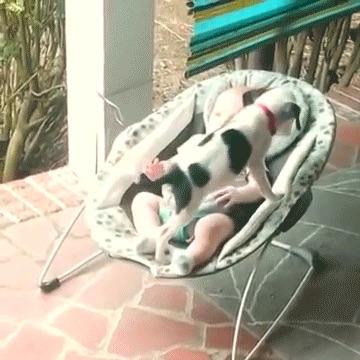 perros-como-bebes-7