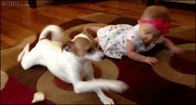 perros-como-bebes-8