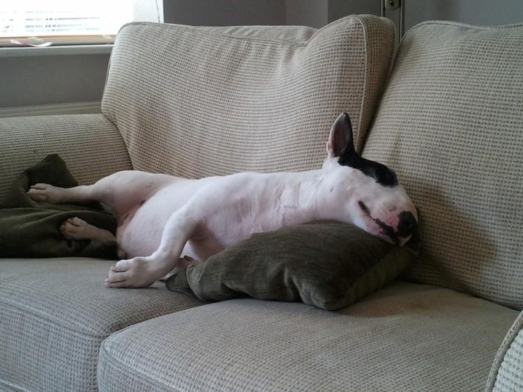 perros-hacen-ruido-mientras-duermen4