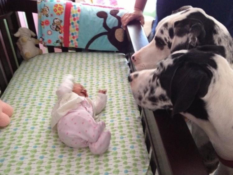 perros y bebes siesta 1